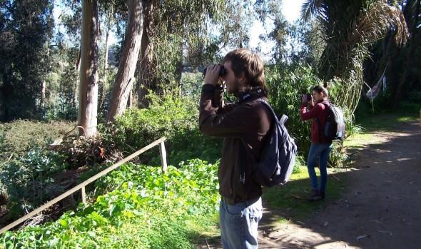 Municipio de Viña del Mar invita al 8° Festival de Aves de Chile