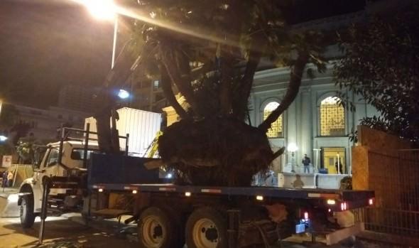 Municipio de Viña del Mar reubicó palmeras del Teatro Municipal en reloj de flores