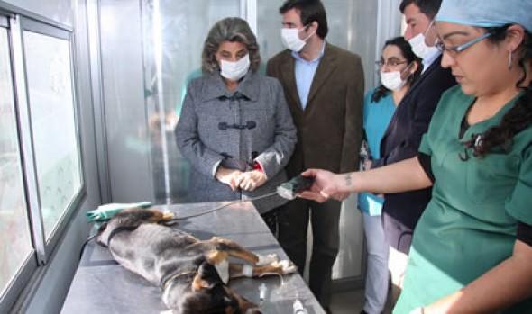 Municipalidad  de Viña del Mar continúa desarrollando programa de esterilización canina gratuita