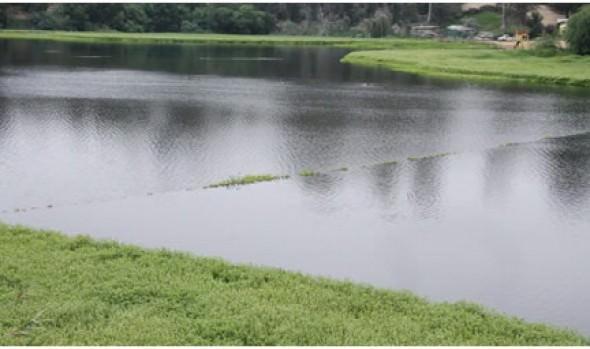 Municipalidad de Viña del Mar informa que despeje de Laguna Sausalito lleva un 90% de avance