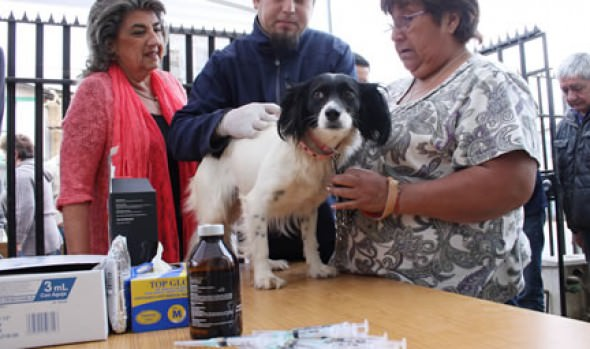 Con capacitaciones y operativos caninos, alcaldesa Virginia Reginato fomenta la tenencia responsable de mascotas