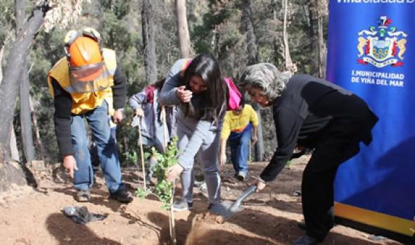 Inicio de reforestación de Quinta Vergara fue encabezada por alcaldesa Virginia Reginato
