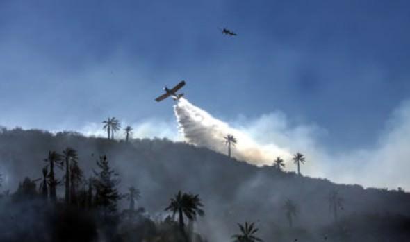 Alcaldesa Virginia Reginato  lamenta siniestro forestal en sector Las Palmas