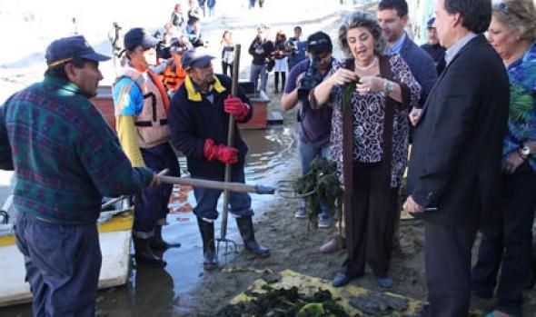 Avance en limpieza de algas en el estero Marga Marga fue destacado por alcaldesa Virginia Reginato