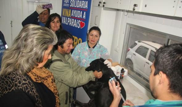 Cuidado de  mascotas afectadas por incendio fue potenciado con Clínica móvil  que llevó alcaldesa Virginia Reginato
