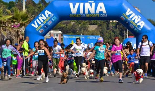 Exitosa jornada de solidaridad canina por Valparaíso tuvo Perrorunning organizada por la Municipalidad de Viña del Mar