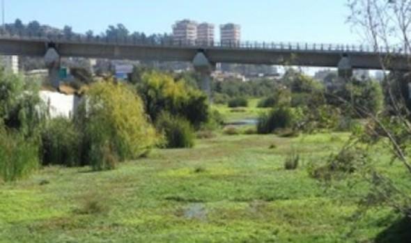 Municipalidad de Viña del Mar aclara situación de humedal en el estero