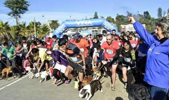 """Cientos de mascotas alentaron a """"La Roja"""" en la Perrorunning de la Municipalidad de Viña del Mar"""