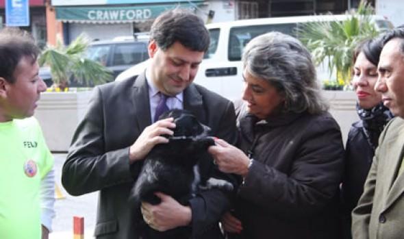 Destacan a Municipalidad de Viña del Mar en programa de control de población canina