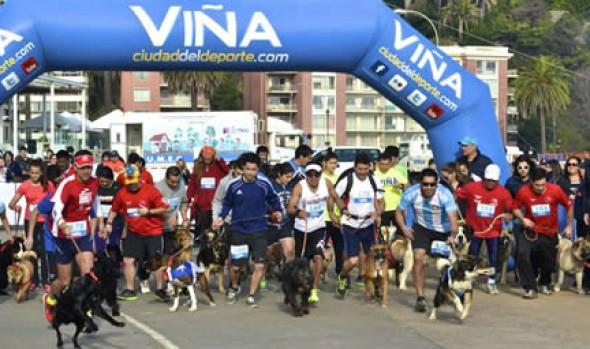 """Municipalidad de Viña del Mar invita a nueva jornada de Perrorunning, """"Corre con tu Mascota"""""""