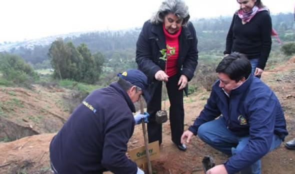 Municipio de Viña del Mar inició proceso de reforestación de Parque Padre Hurtado