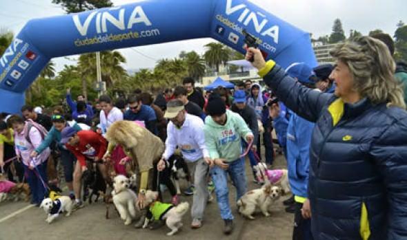 Medio millar de participantes tuvo tercera Perrorunning de la Municipalidad de Viña del Mar