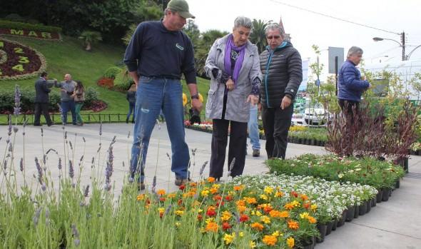 Viña del Mar recibe la primavera con renovación de flores en parques, jardines y áreas verdes