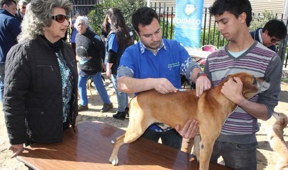 Municipio de Viña del Mar y PDI realizarán operativo sanitario para mascotas
