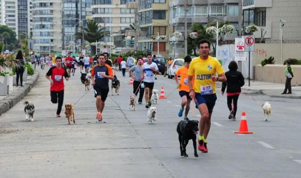 Mascotas despidieron el año participando en la última fecha de la Perrorunning de la Municipalidad de Viña del Mar