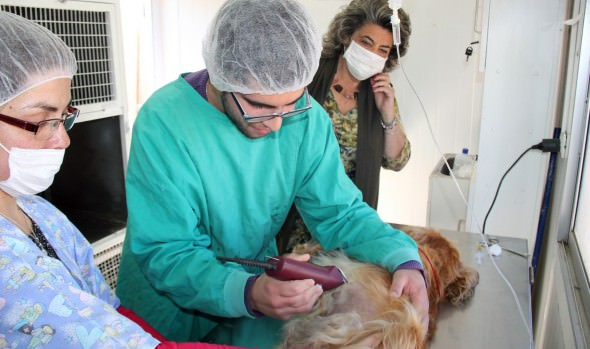 Municipio de Viña del Mar informa calendario de esterilizaciones caninas para diciembre