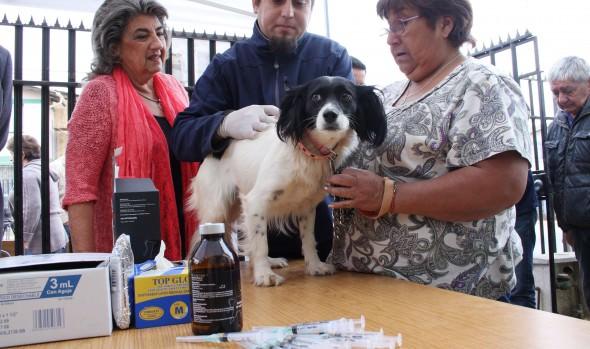 Municipalidad de Viña del Mar entrega consejos para que perros no sufran con fuegos artificiales