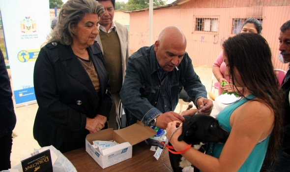 Municipio de Viña del Mar ejecuta masivo programa de control canino contra las garrapatas