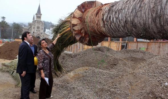 Municipio de Viña del Mar reinstala 16 palmeras en Plaza Sucre