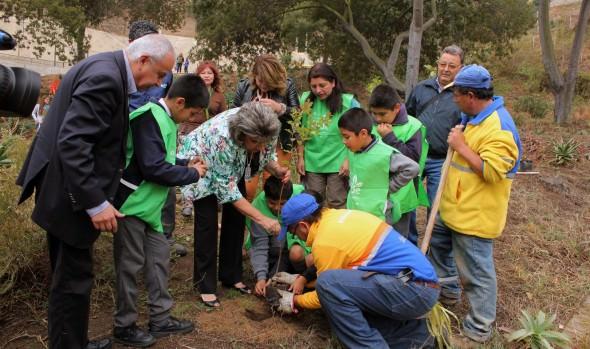 Municipio de Viña del Mar reforesta parque de El Olivar con más de 50 árboles de distintas especies