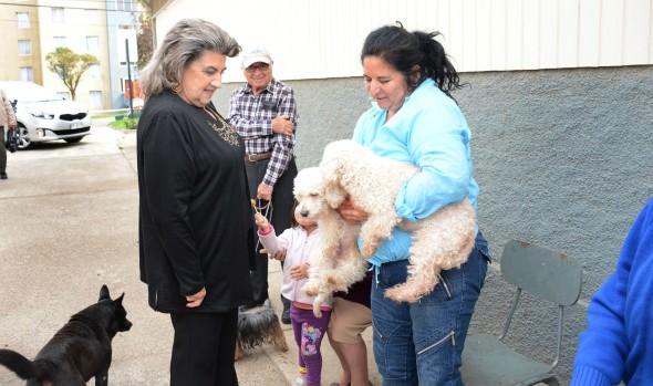 Triplicación de desparasitaciones caninas contra la garrapata en Viña fue destacado por alcaldesa Virginia Reginato