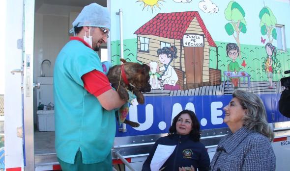 Programa de esterilización  canina de la Municipalidad de Viña del Mar amplía atenciones a los días sábado