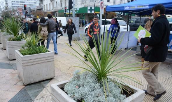 Con nuevas flores y plantas, Municipio de Viña  del Mar  incrementa hermoseamiento de la ciudad