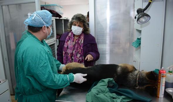 Municipio de Viña del Mar incorpora esterilizacion felina a su programa medio ambiental