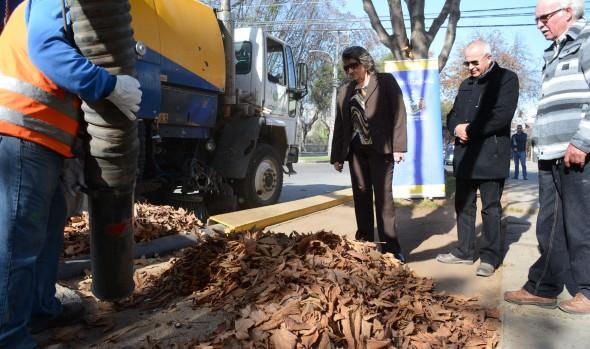 Municipalidad de Viña del Mar realiza intenso operativo de retiro de hojas secas en la vía pública