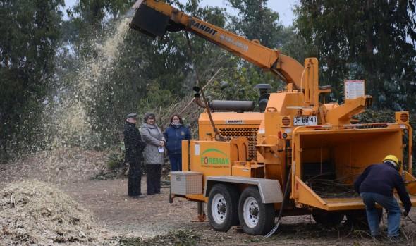 Municipio de Viña del Mar produce su propia tierra vegetal reutilizando ramas de podas y troncos