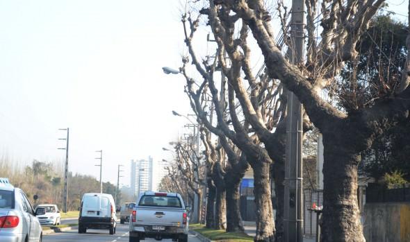 Municipio de Viña del Mar adjudica servicio de conservación para 22 mil árboles ornamentales