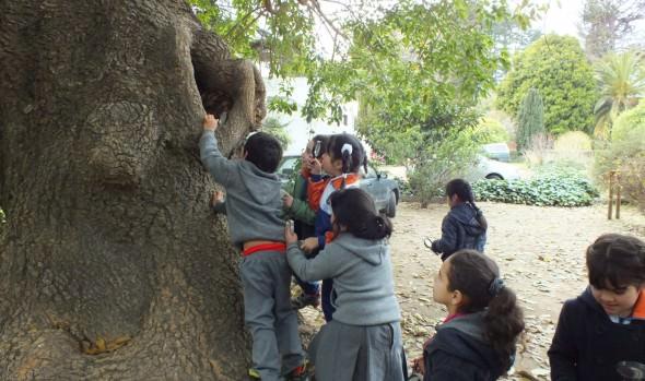 Municipio de Viña del Mar invita a niños a convertirse en Eco Detectives en taller de patrimonio natural en Jardín Botánico Nacional