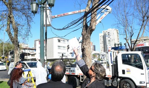 Municipalidad de Viña del Mar potencia limpieza de la comuna con retiro de cables aéreos en desuso
