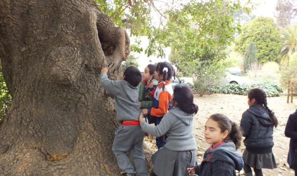 Municipio de Viña del Mar ofrece 7 talleres de arte y patrimonio cultural y natural para niños y jóvenes