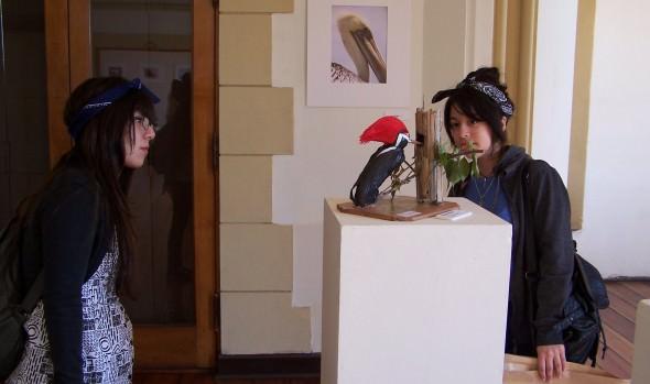 Municipio de Viña del Mar invita a participar a concurso de  eco esculturas del Festival de Aves 2015