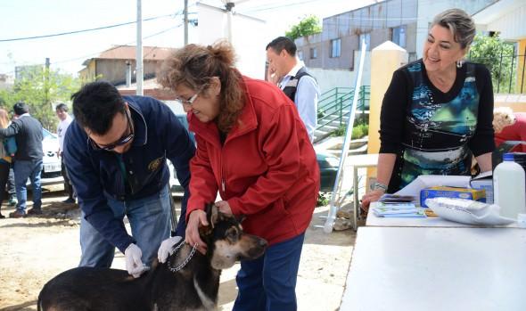 Programa de protección sanitaria canina se realiza en diversos sectores de Viña del Mar