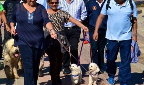 Municipalidad de Viña del Mar reitera consejos para que perros no sufran con fuegos artificiales