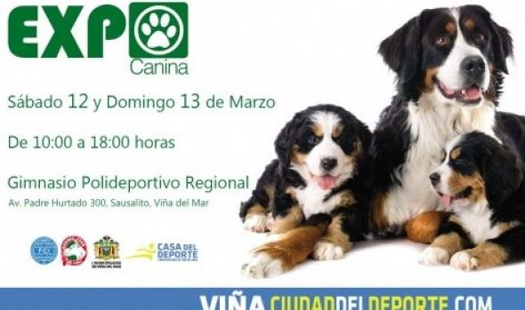 Municipalidad de Viña del Mar invita a competencia canina con presencia de 600 perros de todo el país