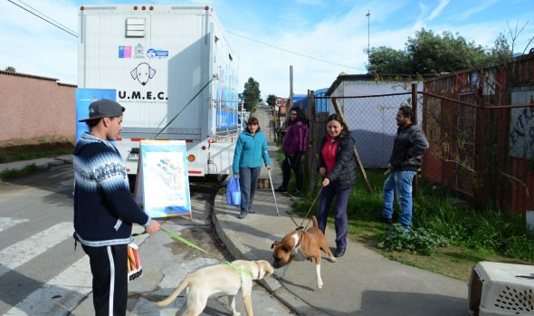 Municipio de Viña del Mar esterilizó 10 mil perritas en unidad móvil