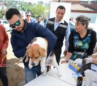 Municipio de Viña del Mar realizará operativo veterinario en plan de la ciudad