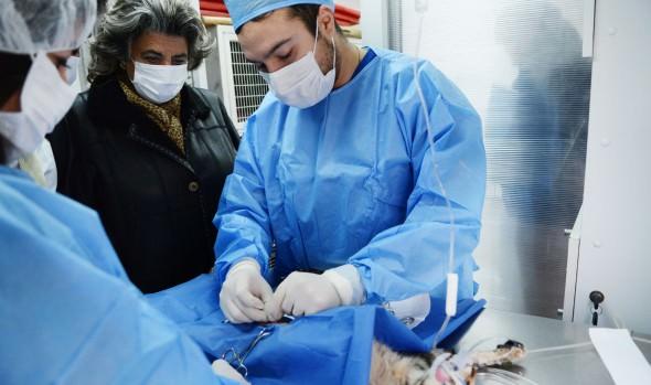 Municipio de Viña del Mar trabaja en nuevos proyectos para esterilizar canes y felinos