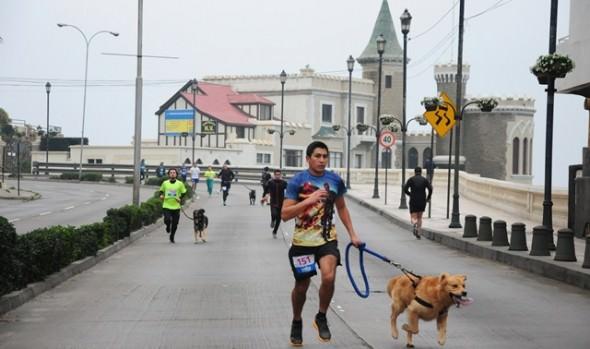 Familias completas participaron en tercera Perrorunning en  Viña del Mar