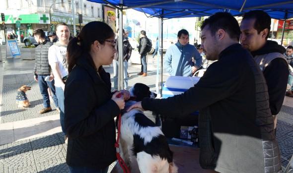 Más de 200 mascotas fueron atendidas en masivo operativo veterinario ejecutado por el municipio de Viña del Mar