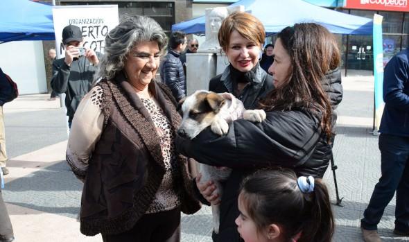 Con jornada de adopción municipio de Viña del Mar refuerza tenencia responsable de mascotas en Viña del Mar