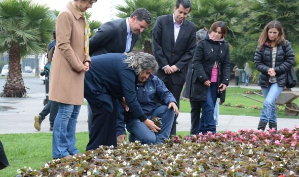 Municipio de Viña del Mar renovará 150 mil especies florales en temporada primavera- verano