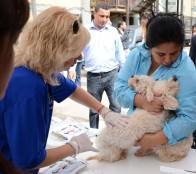 Municipalidad de Viña del Mar inició desparasitación contra la garrapata en canes