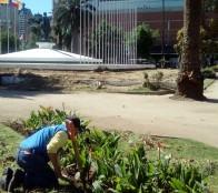 Mejoramiento de plaza O'Higgins presenta 50% de avance
