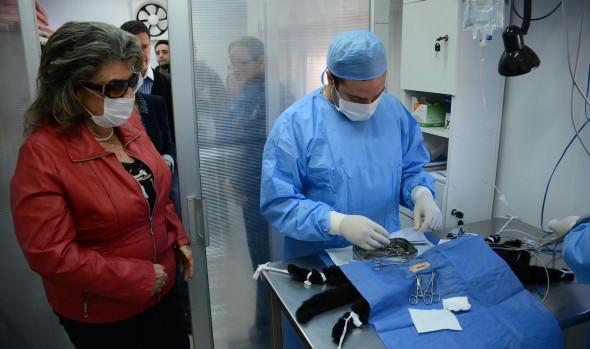 Inicio de proceso de licitación para esterilizar 3.000 mascotas informó alcaldesa Virginia Reginato