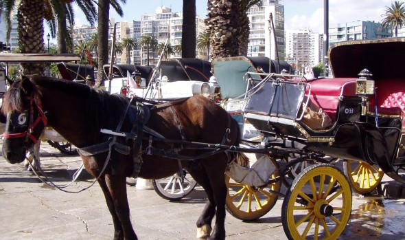 Municipio de Viña del Mar da fuerte señal sobre  funcionamiento de los coches victorias