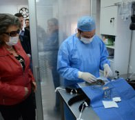 Municipio de Viña del Mar aprobó proyecto para esterilizar 3.000 mascotas